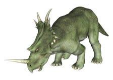 Drinking Dinosaur Styracosaurus Stock Images