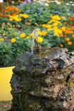Drinking fountain. On the background of flower beds stock image