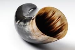 Drinking-horn. Original medieval drinking-horn. Animal horn/tusk Stock Photo