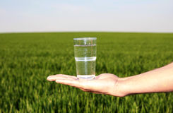 Drinking Water Grassland Stock Photos
