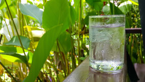 Drinking water. Ice water garden morning green flower Stock Photography