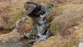 Drinking from a stream in Iceland stock footage