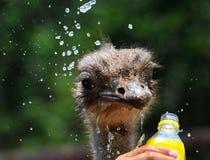 drinkvatten Fotografering för Bildbyråer