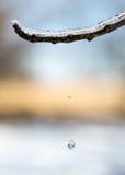Drip drop Royalty Free Stock Photography