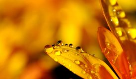 Drip, Drop Of Water, Raindrop Stock Image