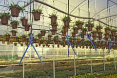 Drip irrigation (drop by drop) Royalty Free Stock Photography