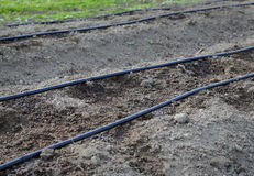 Drip Irrigation System, Farm Field Royalty Free Stock Photo