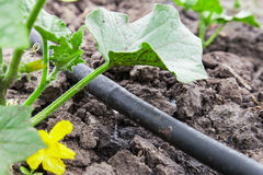 Drip irrigation system stock photography