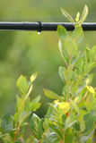 Drip Irrigation System vertical royalty free stock image