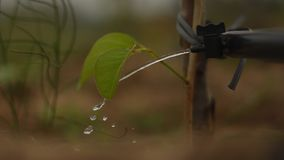 Drip Irrigation. Water flow from a tap to a sapling stock photography