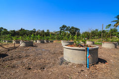 Drip irrigation watering system in lemonfarm Royalty Free Stock Photography