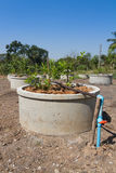 Drip irrigation watering system in lemonfarm Royalty Free Stock Photos
