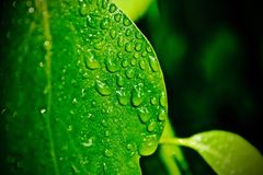 Wet Leaf. One of the very first photos I took, I cheated and used a spray bottle to create the `rainy` look. The vibrancy of the leaf was really striking Stock Photos