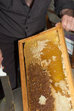 Dripping honey is collected from male beekeeper Stock Photos