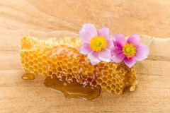 Dripping honeycomb and flowers Stock Photo