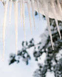 Dripping icicle Stock Images