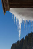 Dripping icicles Royalty Free Stock Image