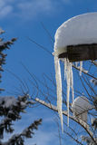 Dripping icicles Stock Images