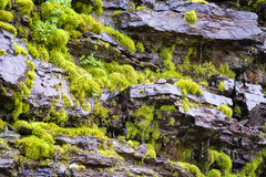 Dripping Moss Stock Images