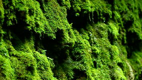 Dripping Moss Shades State Park Indiana stock video footage