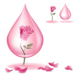 Dripping of rose oil Stock Photo