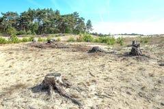 Driva sand i Mosselse för naturreserv zand royaltyfri fotografi