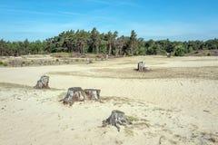 Driva sand i Mosselse för naturreserv zand arkivbilder