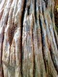 Driva trä arkivbilder