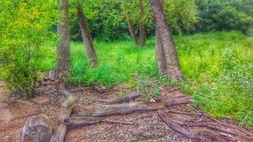 Driva trä som tvättas upp från floden i Oklahoma arkivfoto