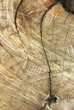 Driva träd som klipps royaltyfria foton