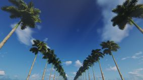 A drive through an alley of palm trees, bottom view, 4K stock video footage