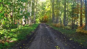 Drive along a dirty rural road in a beautiful autumn forest. POV in the forest thicket.  stock footage