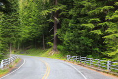 Drive through dense forest Royalty Free Stock Photography