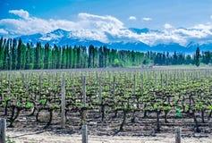 Tupungato (outside Mendoza), Argentina stock image