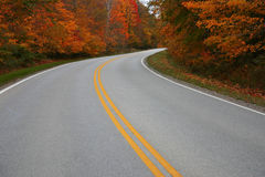 Drive into fall. A road bends through trees in autumn Stock Images