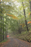 Drive Through a Foggy Woods Royalty Free Stock Images