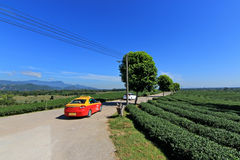 Drive in the tea plantation Royalty Free Stock Photos