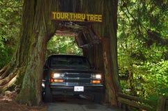 Drive through tree Stock Photo