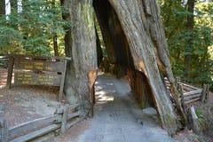 Drive through tree Royalty Free Stock Photo