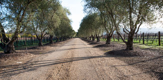 Drive way in vineyard royalty free stock photos