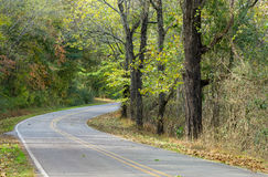Drive Through The Woods Royalty Free Stock Photography