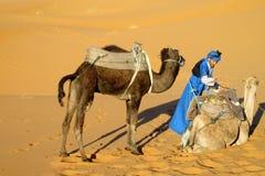 Driver del cammello con due cammelli nel deserto della sabbia immagine stock libera da diritti