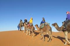 Driver del cammello con il caravan turistico del cammello Immagine Stock