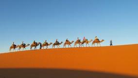 Driver del cammello con il caravan turistico del cammello in deserto Immagini Stock