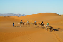 Driver del cammello con il caravan turistico del cammello in deserto Immagini Stock Libere da Diritti