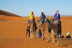 Driver del cammello con il caravan turistico del cammello in deserto Fotografia Stock