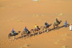 Driver del cammello con il caravan turistico del cammello in deserto Immagine Stock