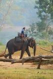 The driver goes on an elephant Stock Photos