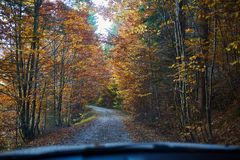 Driver`s view from the car. Driver`s view through windscreen on a road through forest Royalty Free Stock Image
