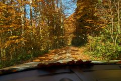 Driver`s view from car. Driver`s view through windshield with fallen leaves Royalty Free Stock Photography